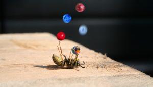 juggling-busy-bee